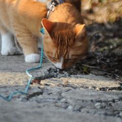 フォロー大歓迎/にゃんこ同好会/猫との暮らし/ねこのきもち/ポカポカ/散歩 今日はポカポカ陽気で散歩もウキウキだニャ…(4枚目)