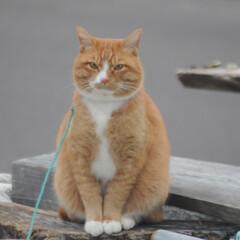 にゃんこ同好会/猫との暮らし/ねこのきもち/散歩/おでかけ まだ散歩したいニャー😿 帰らないニャー😽…