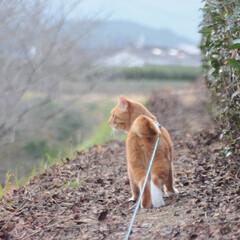 にゃんこ同好会/ねこのきもち/散歩/おでかけ/フォロー大歓迎 今日は日中少し暖かかったにゃ😸 散歩も気…(2枚目)