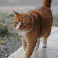 フォロー大歓迎/にゃんこ同好会/猫との暮らし/ねこのきもち/散歩/曇り空 また曇り空になっちゃったニャー😿 でも散…