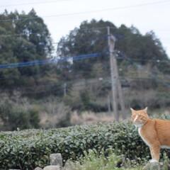 フォロー大歓迎/にゃんこ同好会/猫との暮らし/ねこのきもち/散歩/曇り空 また曇り空になっちゃったニャー😿 でも散…(8枚目)