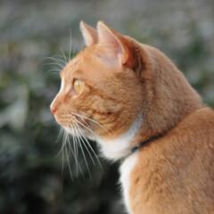にゃんこ同好会/ねこのきもち/猫のいる暮らし/曇り/散歩/おでかけ/... 空は曇っているニャー🙀 早く晴れにならな…(10枚目)