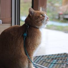 にゃんこ同好会/猫のいる暮らし/雨/散歩/おでかけ/フォロー大歓迎 雨だニャー😿 止むの待ってたけど止まない…