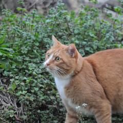 にゃんこ同好会/ねこのきもち/猫のいる暮らし/散歩/おでかけ/フォロー大歓迎 そろりそろり😽 鳥さん遊ぼう➿➿😻(8枚目)