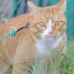 フォロー大歓迎/にゃんこ同好会/猫との暮らし/ねこのきもち/すずめ/鳥/... すずめ🐦さん➿😽 待って~😽🐾🐾🐾➿(7枚目)