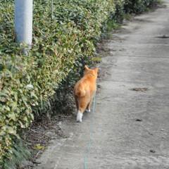 にゃんこ同好会/猫のいる暮らし/ねこのきもち/晴れ/散歩/おでかけ/... わーい😸日が射してきたニャー😸🌤️ 明日…(8枚目)
