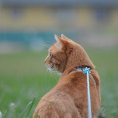 フォロー大歓迎/にゃんこ同好会/猫との暮らし/ねこのきもち/散歩/おでかけ 今日も気合い入れて出動😸🐾🐾🐾🐾🐾(4枚目)