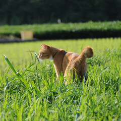 フォロー大歓迎/にゃんこ同好会/ねこのきもち/ねこ/晴れ/梅雨/... このところの雨で草が大分伸びてきたニャー…(4枚目)