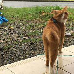にゃんこ同好会/ネコ/ねこのきもち/雨/台風/おでかけ/... 台風⚡🌀☔きたニャー🙀 外に出たけど雨風…