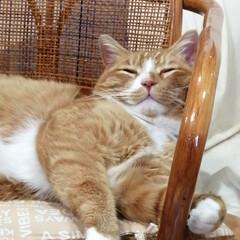 フォロー大歓迎/にゃんこ同好会/猫との暮らし/ねこにすと/ねこのきもち/雨/... 今日も雨だニャー😿☔ 寝るしかないニャー…