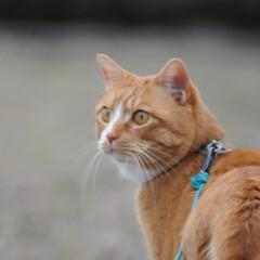 フォロー大歓迎/にゃんこ同好会/猫との暮らし/ねこのきもち/ねこにすと/散歩 気になる杭だニャー😻😻😻 いっぱいスリス…(9枚目)