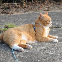 フォロー大歓迎/にゃんこ同好会/猫との暮らし/ねこにすと/ねこのきもち/春/... 🌻季節は進んでいるニャー😸(7枚目)
