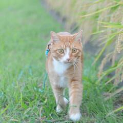 にゃんこ/ネコ/ねこのきもち/散歩/おでかけ/フォロー大歓迎/... 風が冷たくなってきて気持ち良いニャー😸(6枚目)