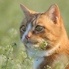フォロー大歓迎/にゃんこ同好会/猫との暮らし/ねこのきもち/散歩 今日は風が冷たいけど広い草むらで思い切り…