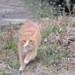 にゃんこ同好会/ねこのきもち/猫のいる暮らし/散歩/おでかけ/フォロー大歓迎 そろりそろり😽 鳥さん遊ぼう➿➿😻(4枚目)