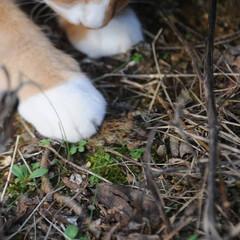晴れ/散歩/猫のいる暮らし/ねこのきもち/フォロー大歓迎 散歩日和⤴️⤴️⤴️😸🐾🐾🐾🐦➿➿🐦(8枚目)
