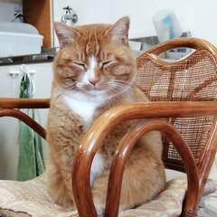 フォロー大歓迎/にゃんこ同好会/猫との暮らし/ねこのきもち/ねこにすと/風/... 今日は風が冷たかったニャー😽➿➿➿😱