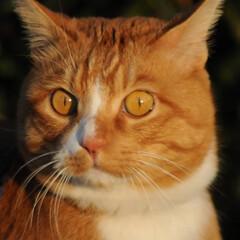 にゃんこ同好会/ねこのきもち/猫のいる暮らし/夕日/散歩/おでかけ/... 夕日の色が綺麗だニャー😻 ちょっと寂しい…(2枚目)