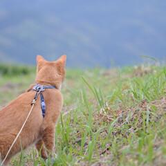 ネコ/にゃんこ/ねこのきもち/散歩/令和元年フォト投稿キャンペーン/令和の一枚/... うまそうな草いっぱい食べたニャー😸🌱😸(2枚目)