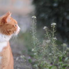 にゃんこ同好会/ねこのきもち/散歩/寒い/おでかけ/フォロー大歓迎 寒いのに雑草は生命力あるニャー😸🌱