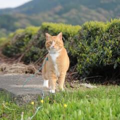 フォロー大歓迎/にゃんこ同好会/ねこのきもち/散歩 今日は風がひんやりでちょっと寒いニャー➿😸(4枚目)