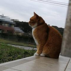 にゃんこ同好会/猫との暮らし/ねこのきもち/雨/散歩 今日も雨😿