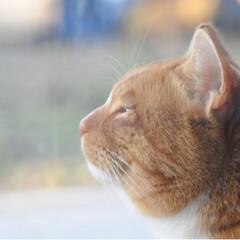 ねこのきもち/フォロー大歓迎/ペット/ペット仲間募集/猫/にゃんこ同好会 さあ 今日もがんばるニャー😼(2枚目)