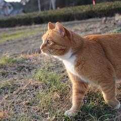 フォロー大歓迎/にゃんこ同好会/ねこのきもち/ねこ/散歩/猫の日 今日は猫の日なのかにゃ🐱 ポカポカ陽気で…(7枚目)