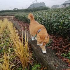 にゃんこ同好会/ねこのきもち/雨/散歩/おでかけ/フォロー大歓迎 今日はすごい雨だったニャー🙀 散歩前に止…