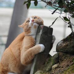 フォロー大歓迎/にゃんこ同好会/猫との暮らし/ねこのきもち/ねこにすと/散歩 気になる杭だニャー😻😻😻 いっぱいスリス…