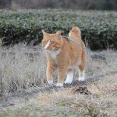フォロー大歓迎/にゃんこ同好会/猫との暮らし/ねこのきもち/散歩/おでかけ 今日も気合い入れて出動😸🐾🐾🐾🐾🐾(2枚目)