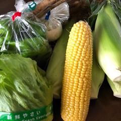 おでかけ 母と二人野菜の産直店へ  トウモロコシ2…(1枚目)