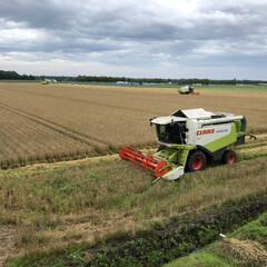 夏の風物詩/風景 我が家の裏の麦畑 刈り取り作業真っ最中‼️