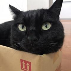 猫派 猫派