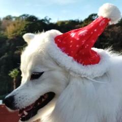 クリスマス/クリスマス2019 可愛いサンタクロース (2枚目)