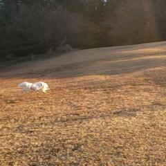 LIMIAペット同好会 バビューン‼️ #飛行犬(1枚目)