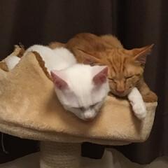 猫好きさん/ねこ好き/ネコ好き/猫好き集まれ/にゃんこ/ねこ/... 仲良し過ぎる〜狭いやんけ
