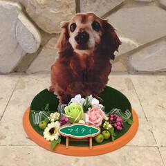 ソープフラワー/花/ペットロス/ペット/ペット仲間募集/犬/... コラボ2  パネルの周りのお花は、作家さ…