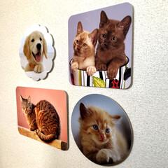 ウォールデコ/写真/猫/犬/こども/子供/... ウォールデコ R加工がお洒落でしょ   …