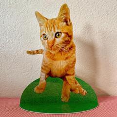 ペットシェルター/猫シェルター/終活/LIMIAペット同好会/わたしのごはん/ペット/... 亡くなった猫ちゃん作らせてもらいました。…