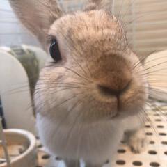 アップ/ウサギ/ペット