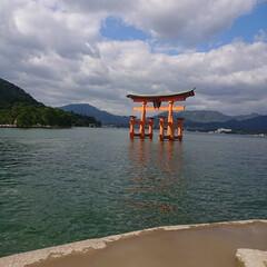 厳島神社/広島/世界遺産/国宝/鳥居/神社/... 昨年の秋に行った厳島神社✨また行きたいな…