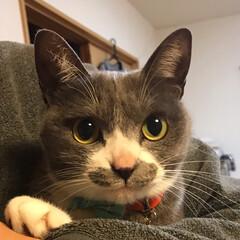 そっく/猫 (1枚目)