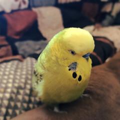 ペット/小鳥 ワンちゃんにバトンタッチです~🐶♥