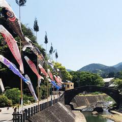 橋/こどもの日/鯉のぼり/おでかけ
