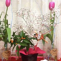 お正月飾り/チューリップ お正月飾りをリフォーム? しながら春を感…