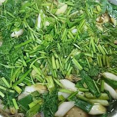 郷土料理/鍋料理/新米/おうちごはん 今年初‼️新米でだまこ鍋を作りました~🎵…