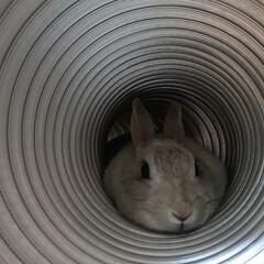 暮らし きゅーとにトンネルのプレゼント。 いつも…(2枚目)