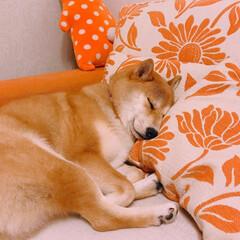 おやすみショット 可愛い寝顔