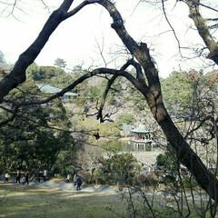 おさんぽ/成田山梅祭り/おでかけ 昨日は暖かくてお散歩日和🐾 成田山公園で…